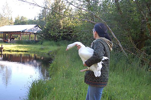 Lisa&goose