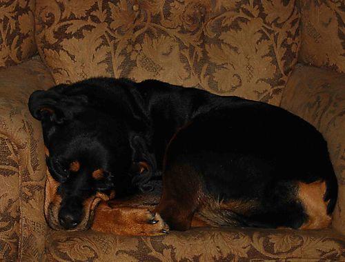 Vivian snuggled