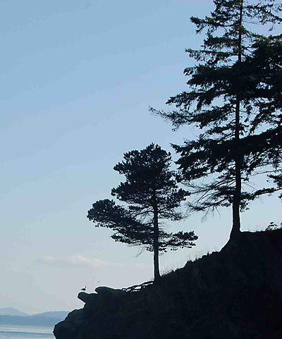 Seagull&treesbay