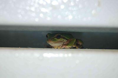 Fridgefrog