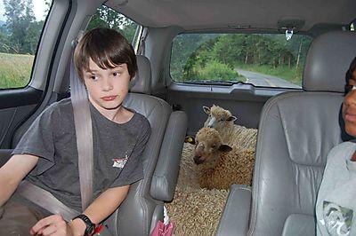 Sheeplookkids