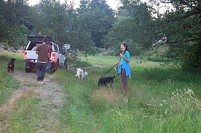 Quinn&dogs
