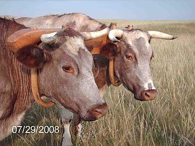 Wyoming14-1