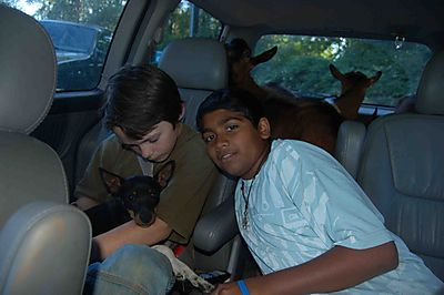 Bruno&goats