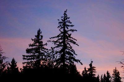 Sunsettrees
