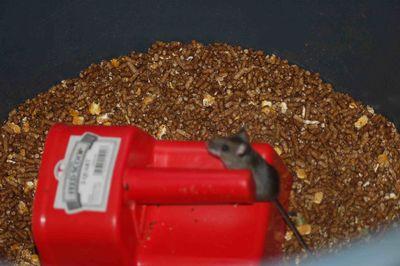 Grain&mouse