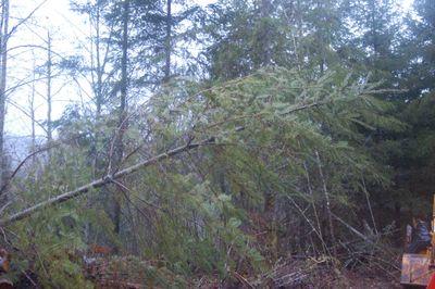 Treefallen