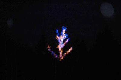 Bluetree3