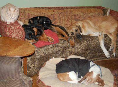 Familydogs&emmet