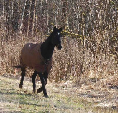 Horseonroadcloserstill