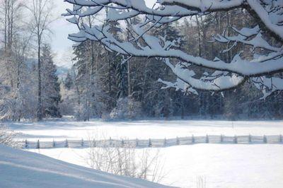 Snowybranchpasture