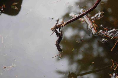 Salamanderwater