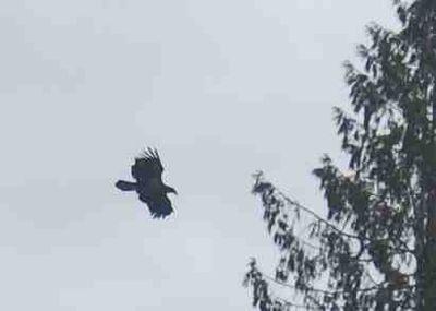 Eaglesoars