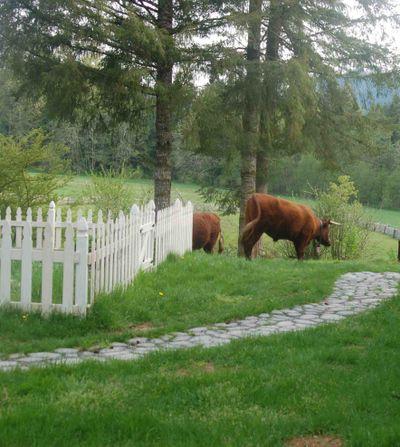 Cowsgarden