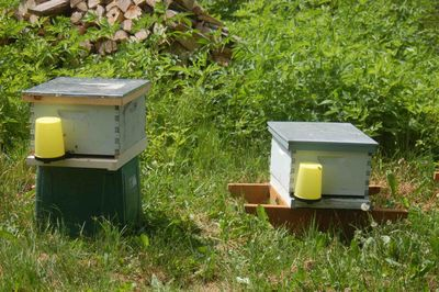 Beefeedersandboxes