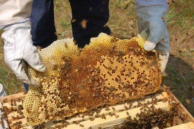 Honeycombrescue