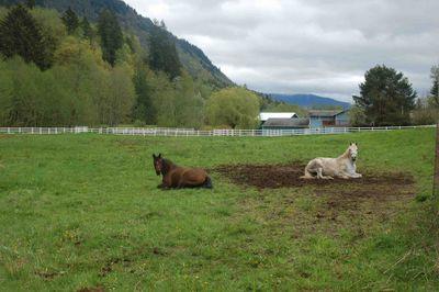 Horsesresting