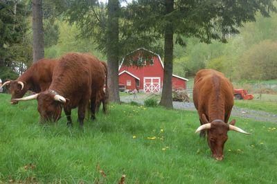 Cowsmow