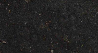 Bearprint