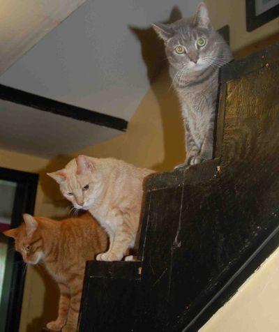 Catswatchstairs