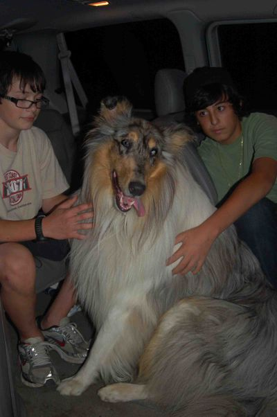 Henrynickvandog