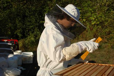 Nickbeekeeping