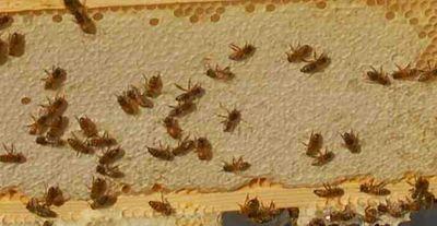 Honeysuper