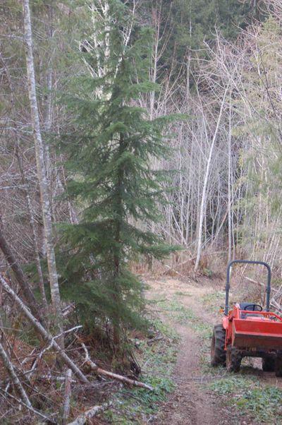 Treeconsideration