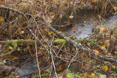 Beaverdamcreek