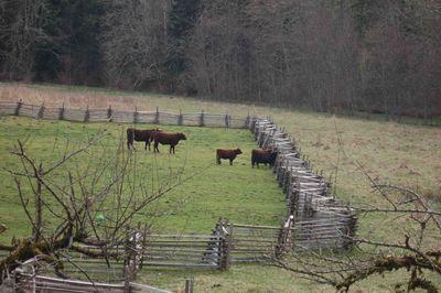 Cowsgoodbye