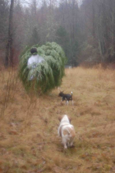 Treeluther